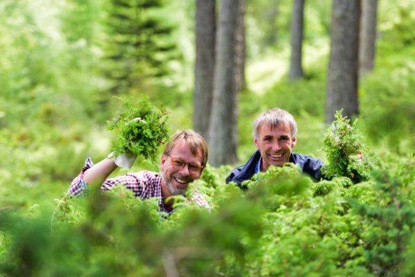 Kiesbye's Waldbier 2016: Es ist geerntet!