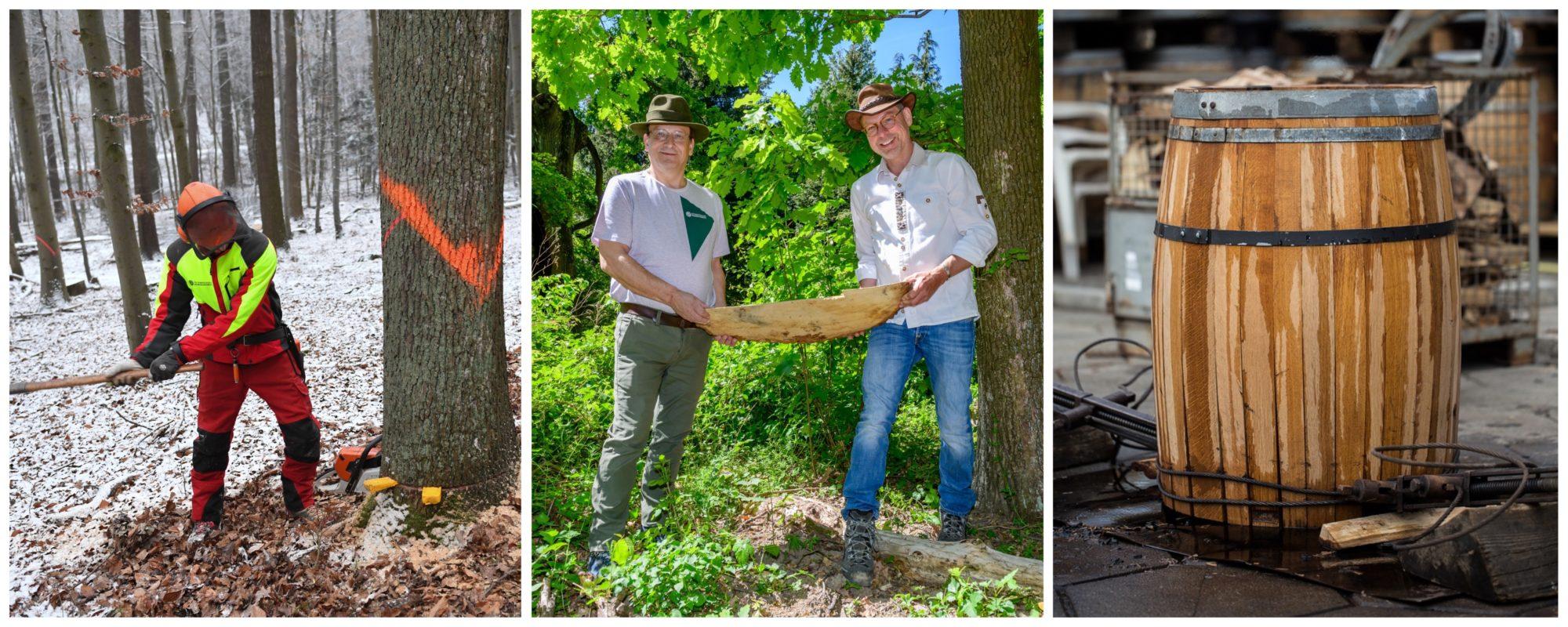 Baumfällen, Holzbeschaffung und fertiges Barrique-Fass